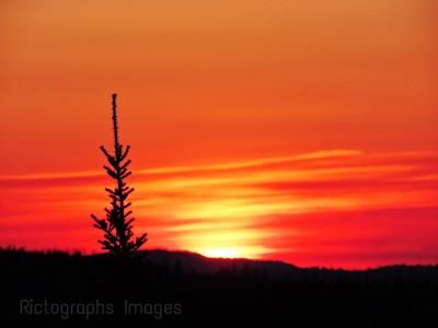 Trees & Sun Down