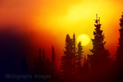 Misty Golden Light,