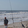 I thought it very odd that this egret stood so close to the fisherman and passing beachcombers. But, when the fisherman's line drew taut with a catch, the egret danced excitedly. The fisherman, seeing the catch was too small for him, tossed it to the egret. I believe they've done this countless times before. Cocoa Beach, Florida