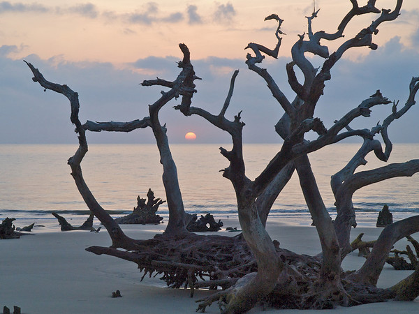 Driftwood Beach, Jekyll Island. On the north end of Jekyll Island, Driftwood Beach illustrates the effects of tidal erosion, as sands from the north end are later deposited on the island's south end. Tides slowly, endlessly, chew away at the dunes, pulling the soil from tree roots, leaving standing and fallen victims of the wooded marshlands.