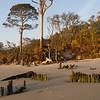 Driftwood Beach, Jekyll Island.