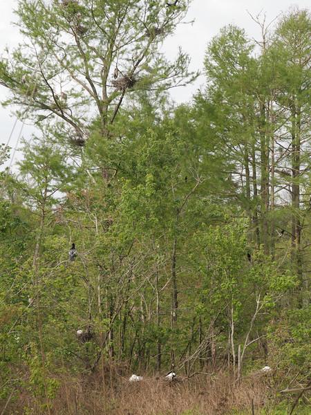 Audubon Swamp Garden, Magnolia Plantation Gardens