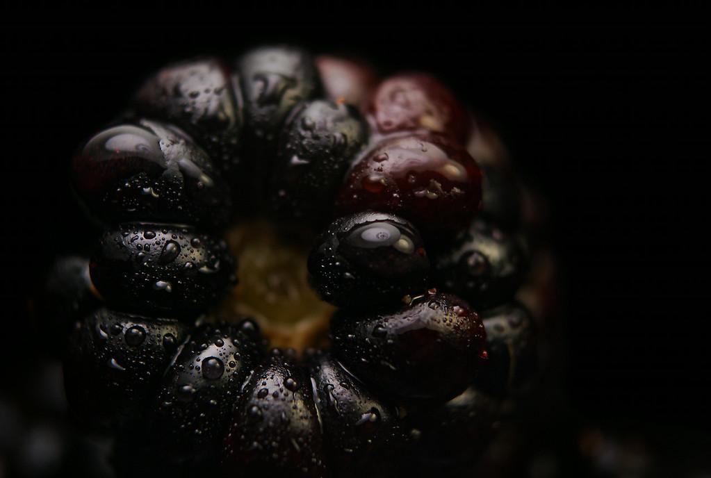 berried (#nerdist #theread #howtodoeverything #thatamericanlife #thanks!)