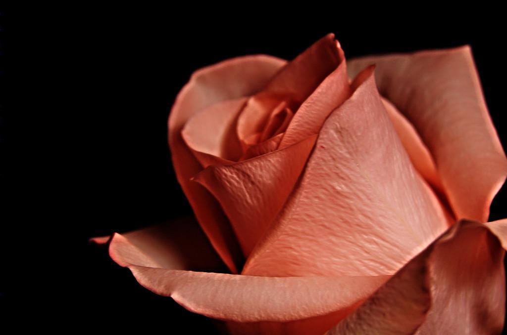 rosed, v2