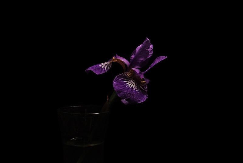 irised