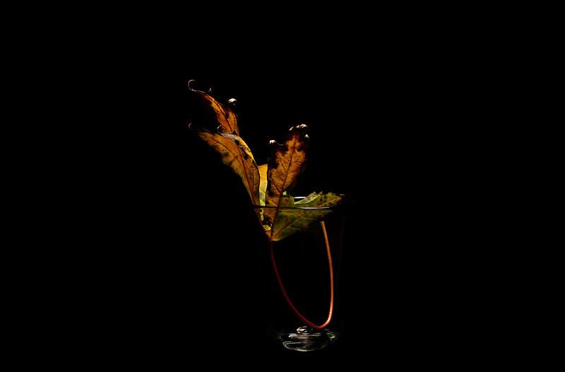 leaf shot