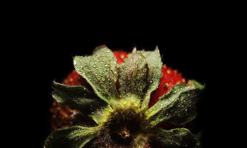 watered berry