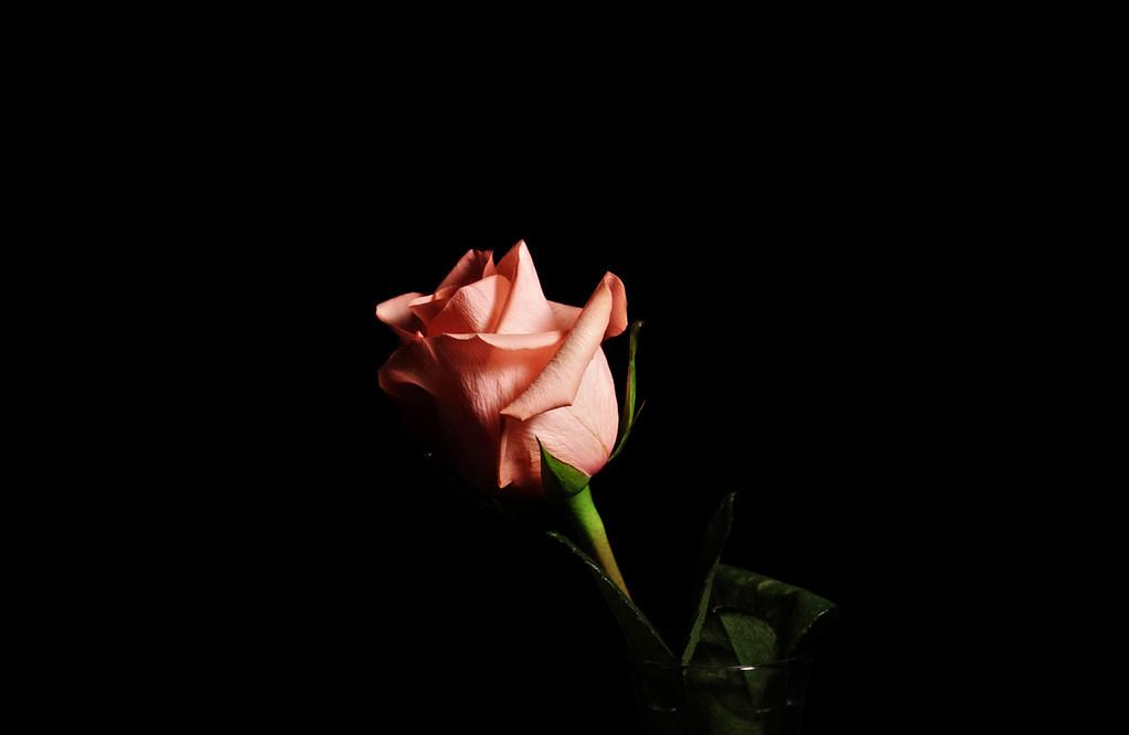 rosed, v4