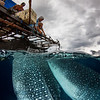 Whale Shark and Fishermen