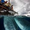 Whale Shark and Fishermen