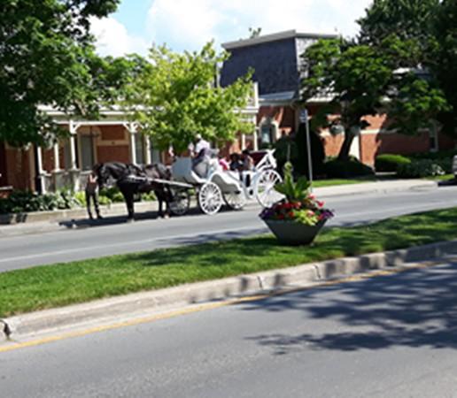 Irene Cook - Horsedrawn cart