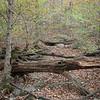 Shawnee National Forest-37
