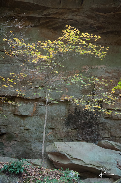 Shawnee National Forest-18