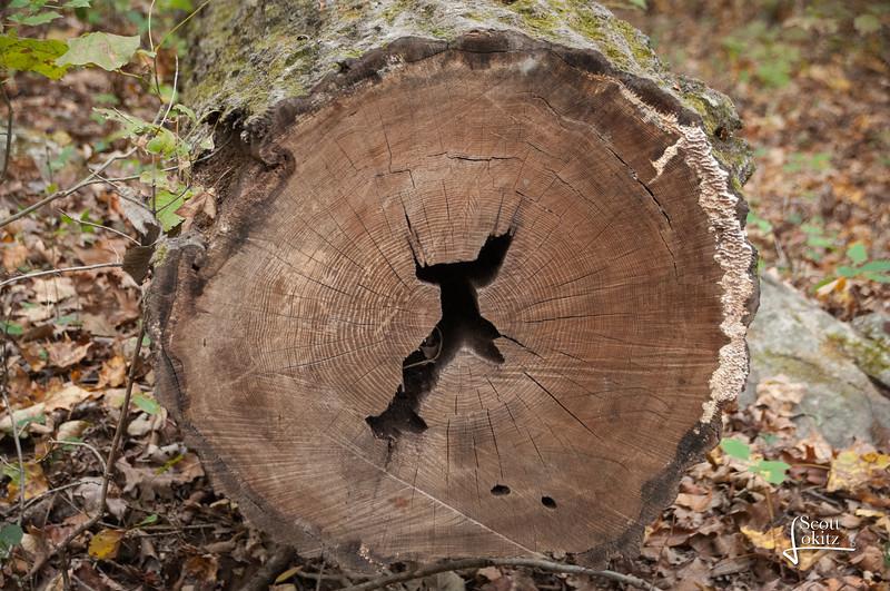 Shawnee National Forest-14
