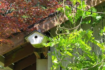 Swallow Bird House at Shawnigan Lake BC