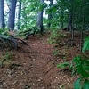 A short forested path creates a trail to the remnants of the abutments that held the wooden Middlesex Canal that crossed the Shawsheen River. -- photo by Mary Leach