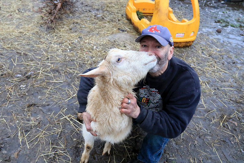 The Townsend farm Shay's Showbirds Flock of Fun Farm excepts Christmas trees to help feed their goats. Jose Hernadez, one of the owners of the farm, hugs one of his goats at the farm on Friday afternoon, December 28, 2018. SENTINEL & ENTERPRISE/JOHN LOVE