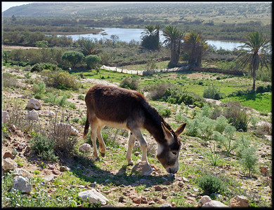 Donkey in the Valley