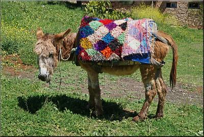 Donkey with Rug