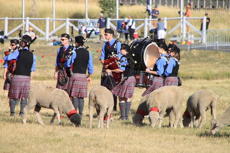 The Salt Lake Scots Bagpipe Band mingles with the ewes during the awards presentation.