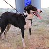 Lyn, a California dog owned by Carolyn Crocker and run by Suzy Applegate.
