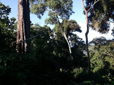 Sheka Forest Initiative
