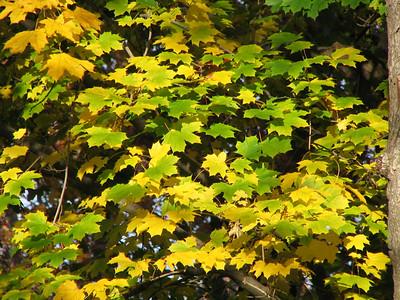 10 - Autumn