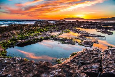 shell beach tidepools-6190