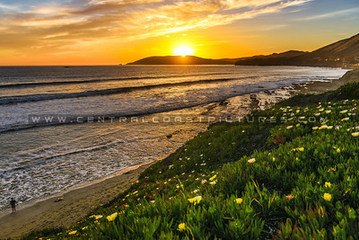shell beach tidepools-6128