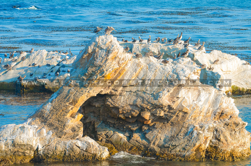 shell-beach-3140