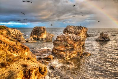 ___shell beach pelicans-3044