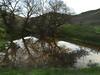 Pond at Franco Creek, Franco Ranch, Benham Court Gate 122114