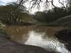 Bramhall Pond  121414