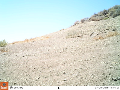 Fossil Hill Wildlife Cam