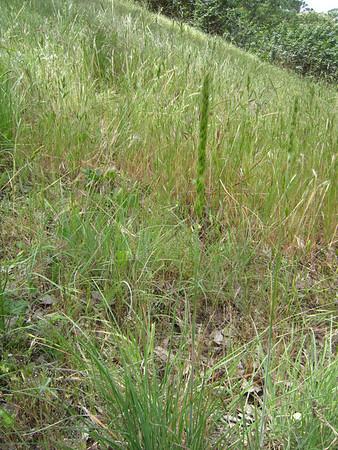 110512 Grasses Indian Creek & Ridge