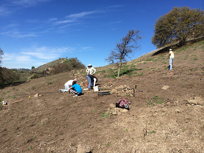 Linda , Karen Sheldon and Madi H. finishing up planting in the Brassica Band area. Arthur, who had run out of something to do, grabbed a hula hoe and started on the uphill mustards, the site for next year's planting project.