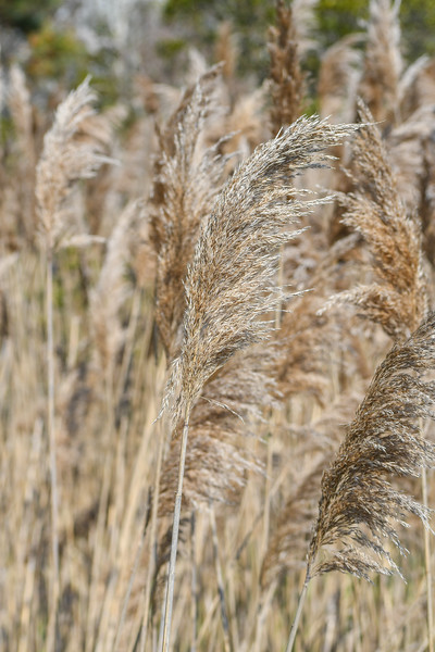 Grasses 8505