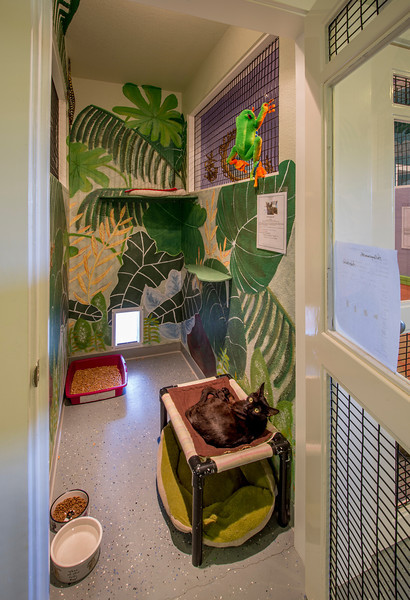 The TNR Suite was  sponsored by a group of FieldHaven volunteer trappers.  Design by Leslie Clark.  This is an individual suite for cats that prefer to not share their home with other cats.  Each suite has a private outdoor area just like the community rooms.