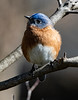 bluebird4454