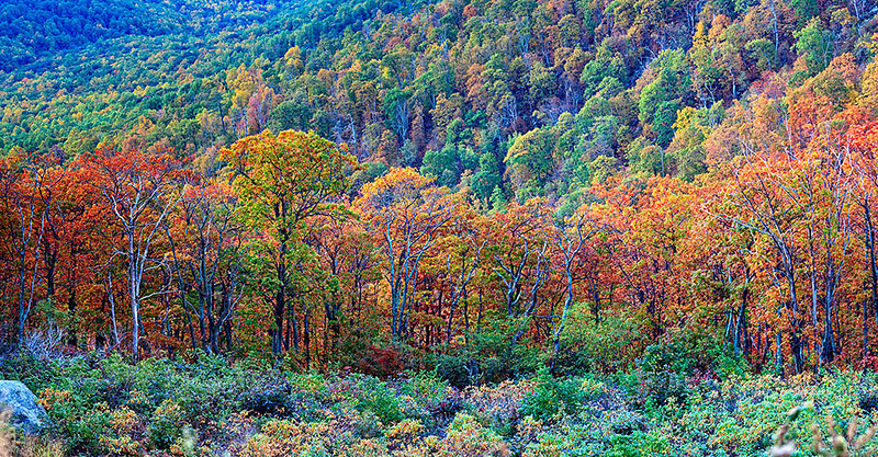 First Frost - The Precipice<br /> Shenandoah National Park