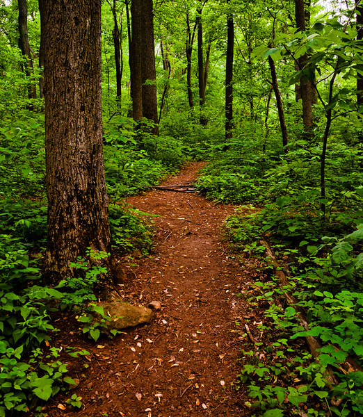 View of Hiking Trail at Low Gap, Shenandoah National Park, Virginia