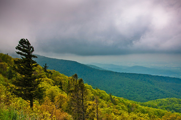 Dark storm clouds over pine trees and the Blue Ridge Mountains, seen from Skyline Drive in Shenandoah National Park, Virginia.