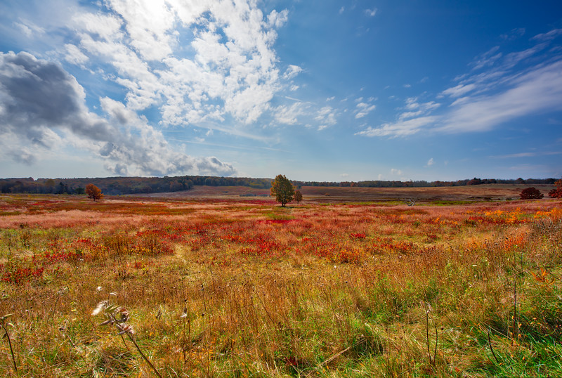 Big Meadows, Fall Colors