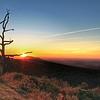 That Shenandoah Tree