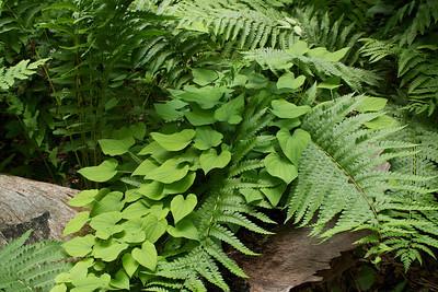 Ferns & Flora