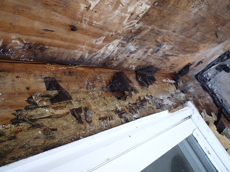 Lots of mold & water damage...
