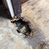 Is it dry rot if it's still wet? (The front door threshold, totally busted)