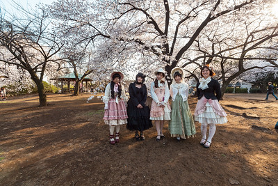 Cosplay under the Cherry Tree