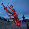 Wizard Tree