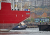 'Ceona Amazon' at Inchgreen Dry Dock - 29 October 2016